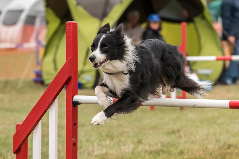 Dog Show Essex September