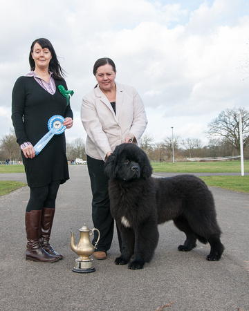 Thickish Newfoundland Zorbas Dance as Best Puppy in Show