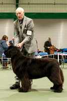 Southern Newfoundland Club Championship Show - 18 November 2017